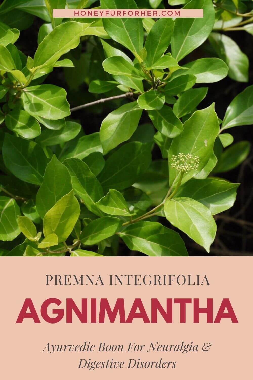 Agnimantha Benefits Pinterest Graphic