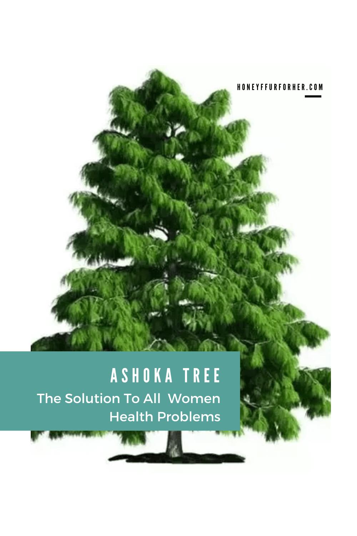 Ashoka Tree Benefits Pinterest Pin Graphic