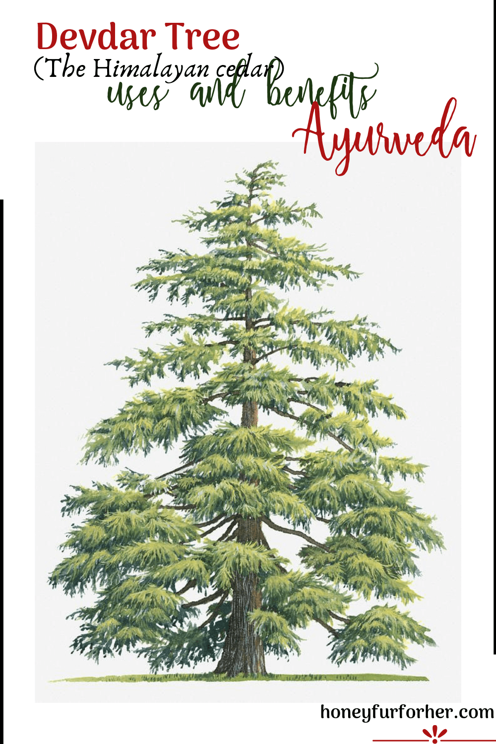 Devadaru Tree Himalayan Cedar Benefits Pinterest Pin Image