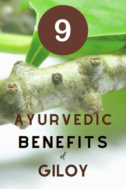 Giloy Ayurvedic Benefits Pin 3
