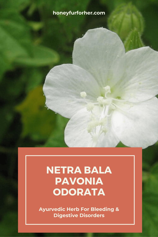 Netrabala Pinterest Pin Graphic