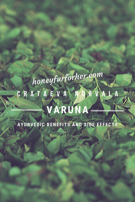 Varuna Benefits Pinterest Graphic