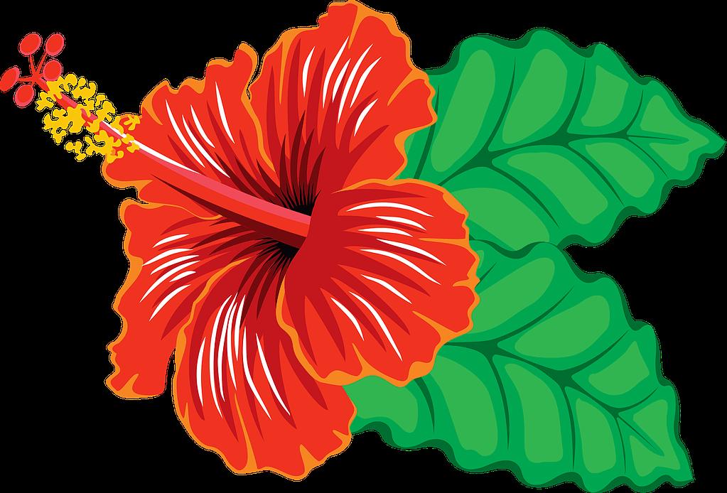 Hibiscus Flower - Aurvedic OIls For Hair Growth