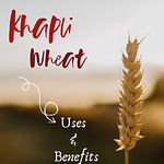 Khapli Wheat Pinterest Pin 2
