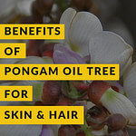 Pongamia Pinnata Karanj Oil Benefits Pinterest Pin 1