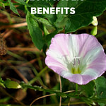 Shankhpushpi Vishnukranthi Benefits Pinterest Pin 1