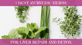 7 Best Ayurvedic Herbs For Liver Repair And Detox Feature Image