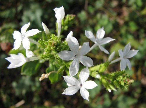Chitrak Plant