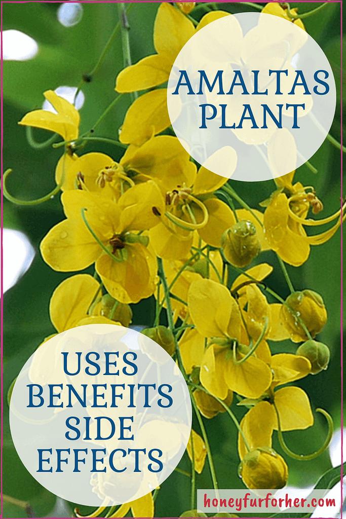 Amaltas Benefits Pinterest Graphic Pin