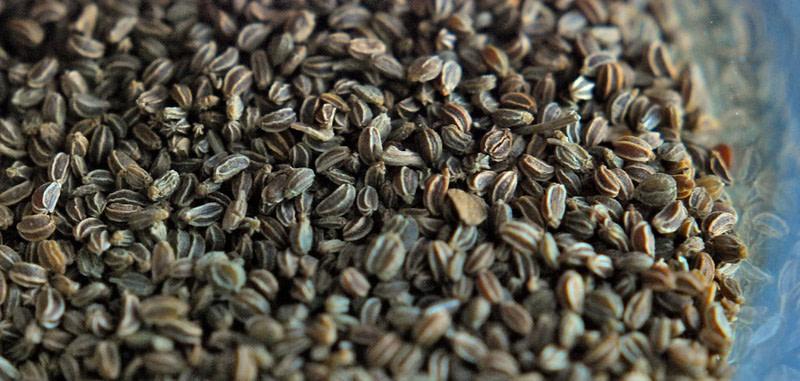 Ajamoda - Celery Seeds
