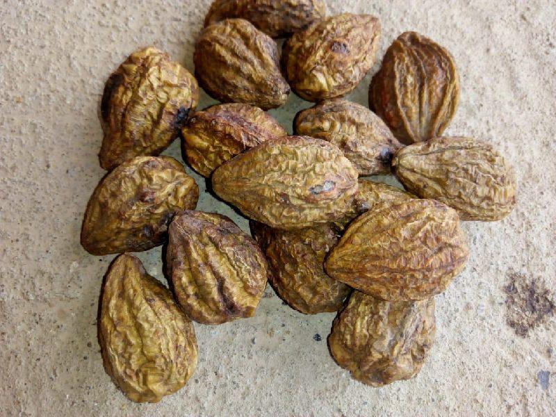 Haritaki Harad Seeds