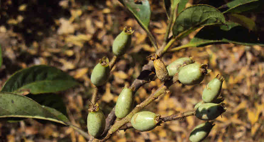 Herbs To Balance Female Hormones - Lodhara Herb