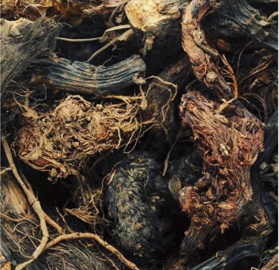 jatamansi root large